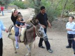 Donkey rides at Park Begin