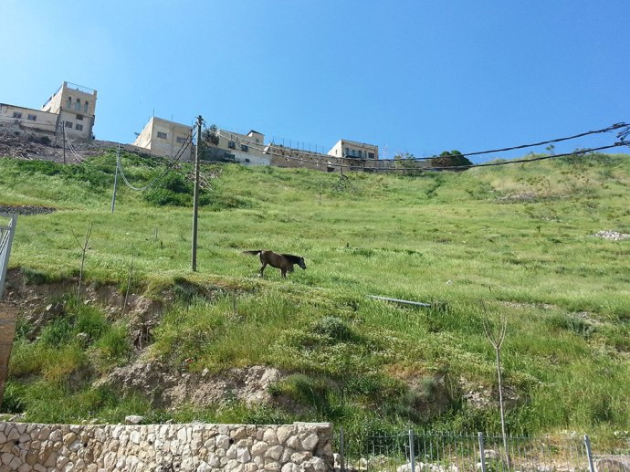 Horse on the slope of the Kidron Valley